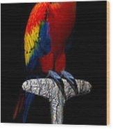 Macaw... Wood Print