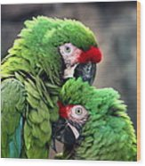 Macaws In Love Wood Print