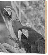 Macaws Of Color B W 14 Wood Print