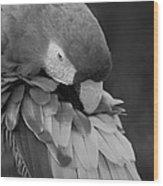 Macaws Of Color B W 17 Wood Print