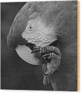 Macaws Of Color B W 18 Wood Print
