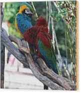 Macaws Of Color24 Wood Print