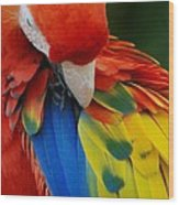 Macaws Of Color25 Wood Print