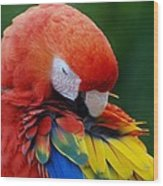 Macaws Of Color26 Wood Print