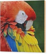 Macaws Of Color28 Wood Print