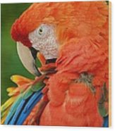 Macaws Of Color29 Wood Print