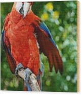 Macaws Of Color30 Wood Print