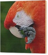 Macaws Of Color32 Wood Print