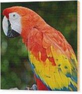 Macaws Of Color33 Wood Print