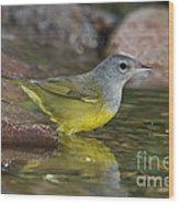 Macgillivrays Warbler Wood Print
