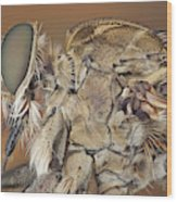 Machimus Sp. 31 Wood Print