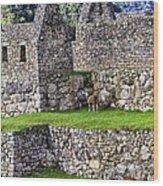 Machu Picchu - Grazing Lamas Wood Print