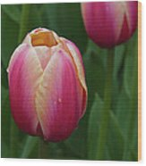 Mackinac Tulip 10386 Wood Print