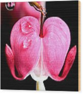 Macro Bleeding Heart Wood Print