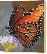 Macro Butterfly Wood Print