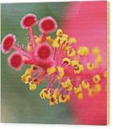 Macro Close Up Of Hibiscus Pollen  Wood Print