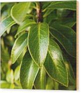 Macro Leaves Wood Print