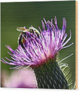 Macro Micro Bee Wood Print