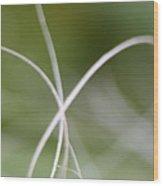 Macro Of A Green Palm Tree Leaf  Wood Print