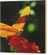 Macro Of An Orange Butterfly Wood Print
