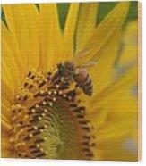 Macro Of Bee On Sunflower...   # Wood Print