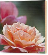Macro Orange And Pink Floribunda Rose Wood Print