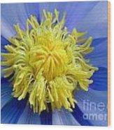Macro Photograph Of  Blue Waterlily Wood Print