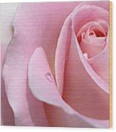 Macro Pink Rose Flower Raindrop Wood Print