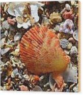 Macro Shell On Sand Wood Print by Riad Belhimer