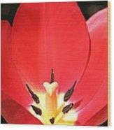 Macro Tulip 2 Wood Print