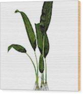 Macrotaeniopteris Prehistoric Plant Wood Print