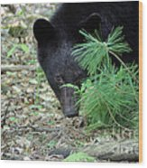 Mad Bear Wood Print