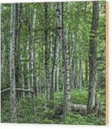 Madeline Island Birch II Wood Print