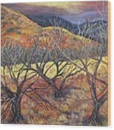 Madera Canyon 2 Wood Print by Caroline Owen-Doar