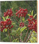Madrone Berries Wood Print