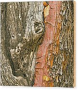 Madrone Tree Bark Wood Print