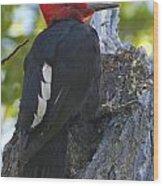 Magellanic Woodpecker Wood Print