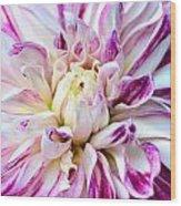 Magenta Dahlia Wood Print