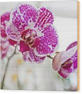 Magenta Ears Orchid Wood Print