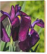 Magenta Iris Wood Print