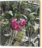Magenta Orchid Wood Print