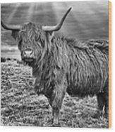 Magestic Highland Cow Wood Print