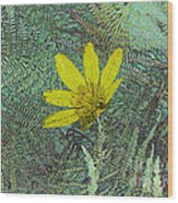 Magic Fern Flower 01 Wood Print