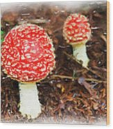 Magic Mushrooms Wood Print