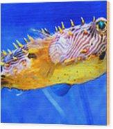 Magic Puffer - Fish Art By Sharon Cummings Wood Print