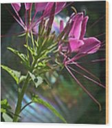 Magical Cleome Wood Print