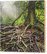 Magical Light On The Appalachian Trail Wood Print by Debra and Dave Vanderlaan