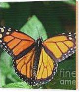 Magical Monarch Wood Print