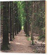 Magical Path Wood Print