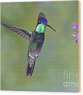Magnificant Hummingbird Wood Print